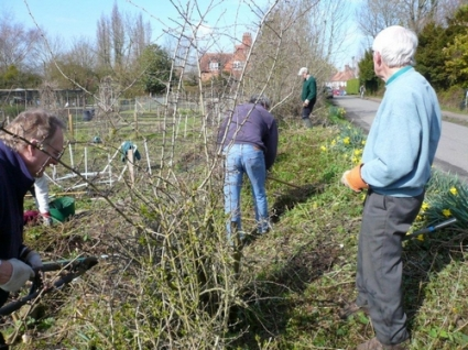 Hedge Laying at the Swan Allotments